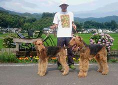 高知県 四万十市 Yさまのワンちゃん 素敵なお散歩コースで撮ったエアデールテリアの コー君とリー君 です