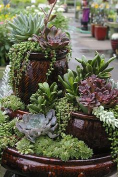 Container Gardening Ideas Amazing Succulents Garden Decor Ideas 36 - Succulents are perfect plants for dry gardens and are easy to root and grow. Once you learn how easy it […] Succulents In Containers, Container Plants, Cacti And Succulents, Planting Succulents, Container Gardening, Planting Flowers, Container Flowers, Succulent Landscaping, Succulent Gardening