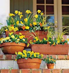 uniform colored flowers and pots all different sizes