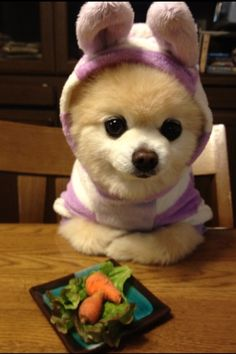 Cute easter dog costume for this super cutie puppy and baby carrots