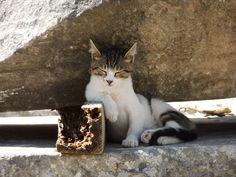 Efes harabelerinde bir kedicik. İyi de bizim kediler böyle oturmayı nereden öğreniyorlar ki? :)
