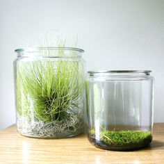 vintage apothecary jar terrariums by ethanollie, via Flickr
