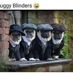 Since Join the Pugs bring the cuteness to Pug lovers all over the world. If you love Pugs. you'll love our website and social media. Funny Dogs, Cute Dogs, Funny Animals, Cute Animals, Baby Animals, Animal Memes, Black Pug Puppies, Dogs And Puppies, Doggies