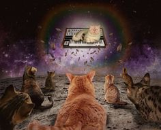 all-thats-interesting:  Cats On Synthesizers In Space A lot of...