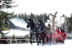 From @hatfieldfarm  Snow storm? What snow storm? If you're looking for a fun weekend adventure join us at 2:00PM on Saturday and Sunday for a snowy sleigh ride and some hot cocoa! See you this weekend