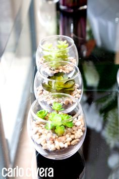 Vasetto di vetro con piante grasse,rifinito da ciottoli bianchi su terra sintetica. http://carlocivera.org  #vasetto #piantegrasse