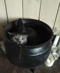 I'M the witch and YOU'RE supposed to be in here ! - LOLcats is the best place to find and submit funny cat memes and other silly cat materials to share with the world. We find the funny cats that make you LOL so that you don't have to. I Love Cats, Cute Cats, Funny Cats, Funny Animals, Cute Animals, Crazy Cat Lady, Crazy Cats, Chat Halloween, Vintage Halloween