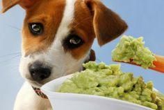 Lista de alimentos tóxicos para los perros