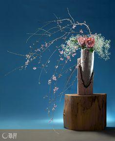 個性的な器にしだれ桜の線のおもしろさを意識しながら、全体を構成します。中心にやわらかい雰囲気のかすみそうと対をなすようにキングプロテアを合わせ、バランスの妙を楽しみました。花材:しだれ桜、キング・プロテア、かすみそう 花器:陶器花器(小川待子) Overall design was constructed while keeping in mind the interesting lines of flowering cherry and distinctive container. Protea cynaroides were added in the center to make a contrast with the soft baby's breath. The excellent balance is enjoyable. Materials:Flowering cherry, Protea cynaroides, Baby's breath Container:Ceramic vase(Machiko Ogawa)
