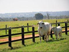 #Com meta de imunizar 8 milhões de animais, vacinação tem início em MS - Campo Grande News: Campo Grande News Com meta de imunizar 8…