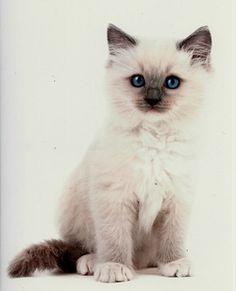 so cute!! i want one