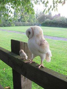 Owl Photos, Owl Pictures, Beautiful Owl, Animals Beautiful, Cute Funny Animals, Cute Baby Animals, Fluffy Cows, Owl Pet, Owl Bird