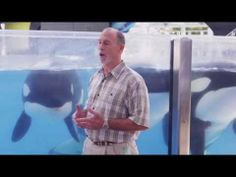 The Importance of Killer Whale Social Structures - The Truth is in Our Parks and People | SeaWorld®