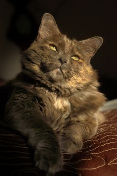 """""""My cat is dressed in a tortoise-shell suit and I know you will delight in her."""" --John Donne"""