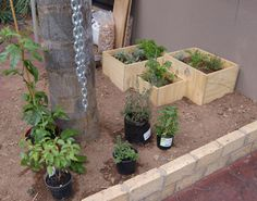 HOME DZINE Garden | Make a hanging herb garden