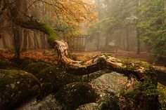 Fairy Tale Forest.  Vitosha Nature Park, Bulgaria.  The territory of Vitosha mountain includes Vitosha Nature Park which encompasses the best known and most frequently visited parts. The foothills of Vitosha shelter resort quarters of Sofia; Knyazhevo quarter has mineral springs. Vitosha is the oldest nature park in the Balkans.