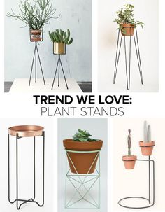 plant stand in - Buscar con Google