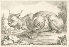 [Lynx.] From New York Public Library Digital Collections.