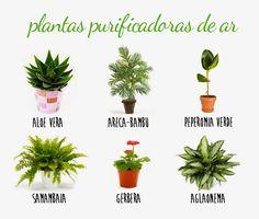 Barbara Paisagismo e Meio Ambiente: PLANTAS PURIFICADORAS DE AR/SAÚDE E MEIO AMBIENTE