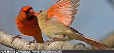 Frequently Asked Questions: Do Birds Mate for Life? :: Bird Watcher's Digest