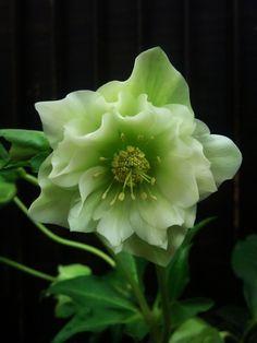 <3 green flower http://cuudulieutransang.wix.com/trangchu