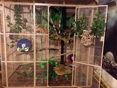 Jungle Jam!! Cage theme on Glidercentral.net  If I had the space, I'd make a cage like this for my boos!