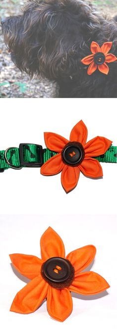 Pumpkin inspired dog collar flower accessory | www.waggycampers.co.uk