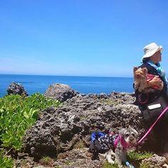 過去pic #沖縄 あいが2才 本島最北 #辺戸岬 #okinawa #grandma #ばあば #三姉妹犬 #犬 #ドッグ #わんこ #愛犬 #ペット #ヨーキー #ヨークシャーテリア #シュナウザー #ミニチュアシュナウザー #dog #yorkie #yorkshireterrier #schnauzer #miniatureschnauzer ##instdog #doglover #pets