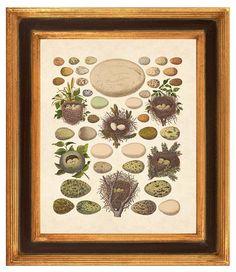 Nursery art Educational art Vintage bird Eggs by PrintCorner