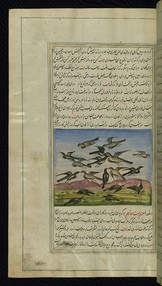 The lights of Canopus, Owls fight crows, Walters Art Museum Ms. W.599, fol.84a by Walters Art Museum Illuminated Manuscripts, via Flickr