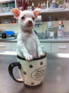 Too cute for words! #DrKupkee #SabalChaseVet #Puppies http://sabalchaseanimalclinic.com/home.html Follow us on #Facebook #Twitter and #GooglePlus!