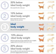 Use a Body Condition Score chart to work out if your pet is at a healthy weight.