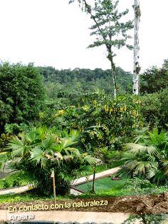 Recorre nuestras instalaciones y admira todo lo que te ofrece el bosque tropical. En Arashá disfrutas de todo lo que está a tu alrededor.