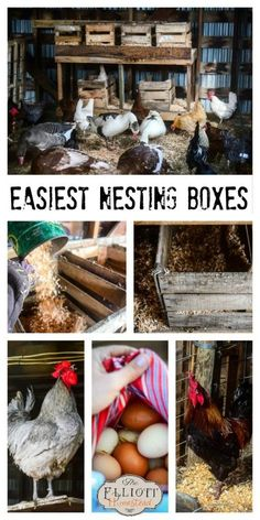 Easiest Nesting Boxes for Chickens