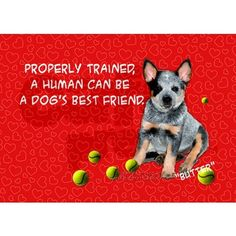This is sooooo true with an ACD!!! I know this is what Ziggy thinks!!