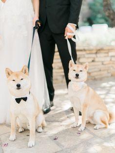 Flower pup and ring bearer pup! http://www.stylemepretty.com/2015/05/11/formal-pink-gold-ballroom-wedding/   Photography: Honey Honey - http://www.hoooney.com/