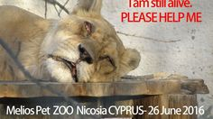 Please, Please, Please help!! Melios Pet Centre is killing these animals, Melios Zoo Nicosia, the animals are neglected, cramped underfed with sores on their bodies and eyes, they are severely ill-treated just to earn money in a public show. Please help them, with your help we can change this torture...