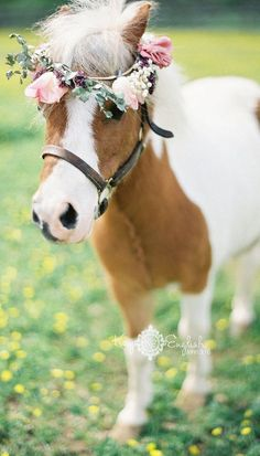 What a cute idea - have your ring barer and flower girl pulled down the aisle in a cart with a mini pony. Cute Horses, Pretty Horses, Horse Love, Beautiful Horses, Animals Beautiful, Mini Horses, Beautiful Creatures, Mini Pony, Cute Baby Animals