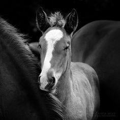 Horses foal