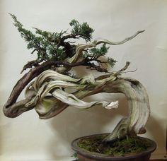 2011年03月 : 雨宮園 ☆~盆栽・山野草・陶芸~☆趣味が仕事でも・・・。