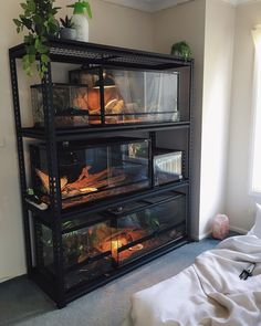 reptile rack setupYou can find Reptile cage and more on our website. Reptile Habitat, Reptile Room, Reptile Cage, Reptile Tanks, Les Reptiles, Cute Reptiles, Amphibians, Reptiles Preschool, Snake Cages