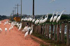 Ninhal, Pantanal Brasil  @Amandina Morbeck