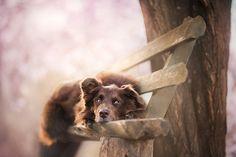 Photograph Spring Dreams by Alicja Zmyslowska on 500px