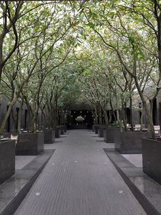 Minimalist Garden 2