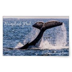 This sticker features a humpback whale displaying its huge tail fluke off the waters of Surfers Paradise, Australia during its annual migration.