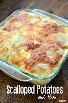 Scalloped Potatoes and Ham (NoBiggie) Mug Recipes, Fruit Recipes, Side Dish Recipes, Potato Recipes, Pork Recipes, Cooking Recipes, Side Dishes, Casserole Recipes, Recipes