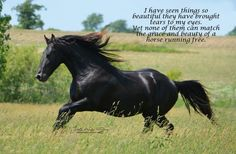 """Horse quote... """"I have seen things so beautiful they have brought tears to my eyes. Yet none of them can match the grace and beauty of a horse running free."""""""