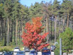 Paisagem / Europa  / Outono