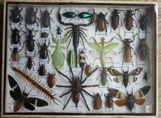 REAL+Multiple+INSECTS+BEETLES+Scorpion+Spider+by+thaicraft2you,+$68.90