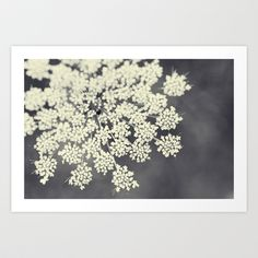 Black+and+White+Queen+Annes+Lace+Art+Print+by+Erin+Johnson+-+$19.00